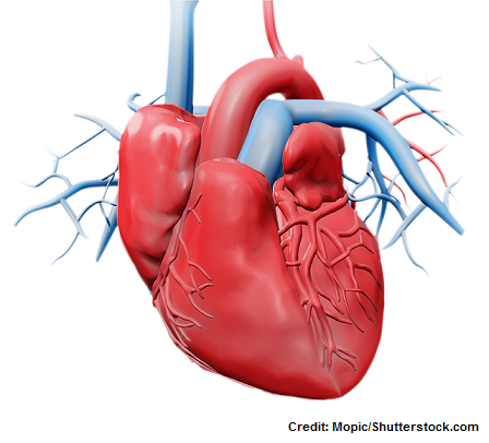 blood flow of the heart, heart blood flow, quiz, heart blood flow