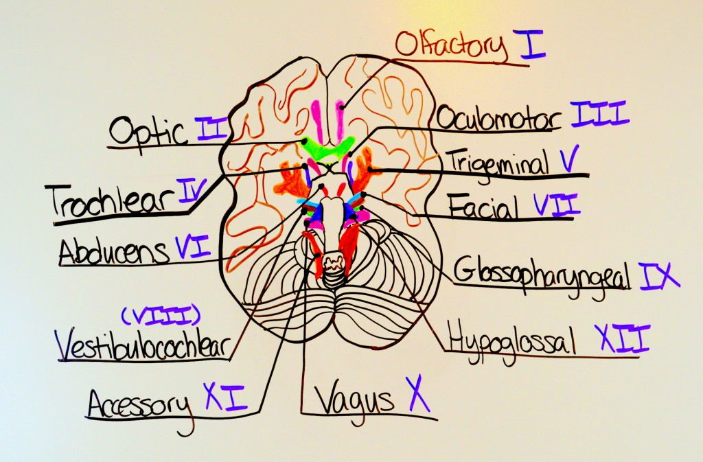 easy way to remember cranial nerves