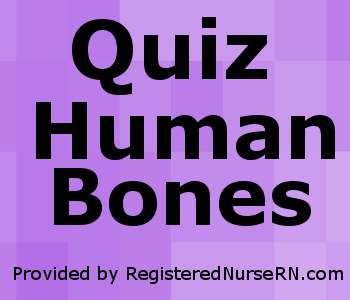 quiz on human bones for anatomy & physiology, Skeleton