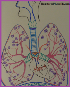 lung gas exchange