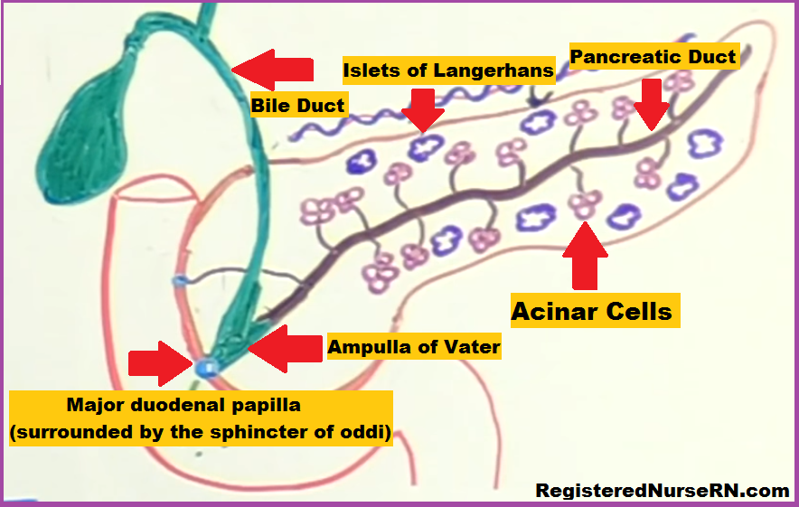pancreatitis, nclex, acute pancreatitis, chronic pancreatitis