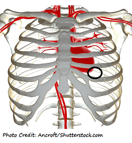 Apical Pulse Assessment and Location