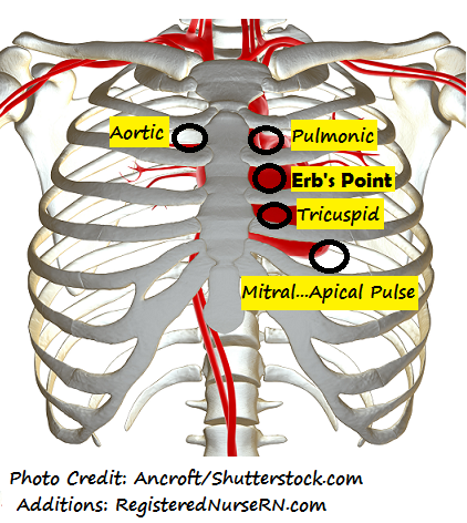 auscultating heart sounds locations, nursing head to toe assessment