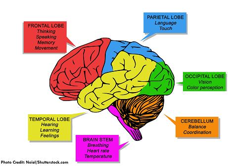 brain, lobes, functions, nursing, nclex, brain injury