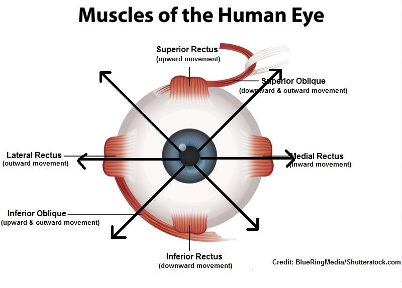 six cardinal fields of gaze, nursing, assessment, cranial nerves