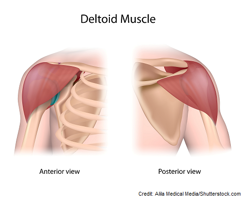 deltoid muscle, im injection, intramuscular, nursing