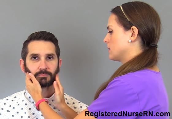 trigeminal nerve, motor function, assess cn v