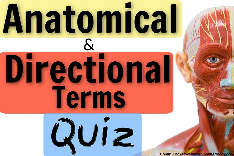 anatomical terms, directional terms quiz, anatomy physiology quizzes, nursing