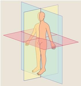 Body planes, body sections, frontal plane, transverse plane, oblique plane, sagittal