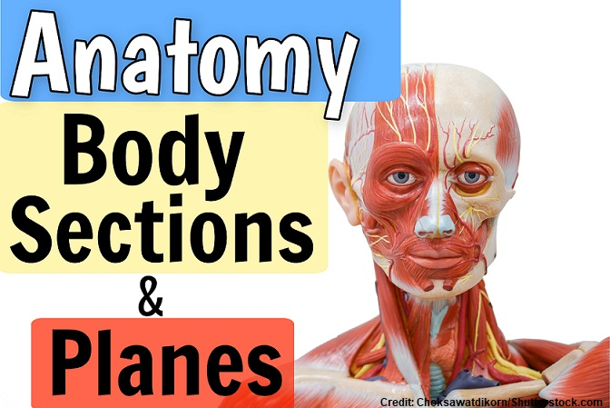anatomy physiology quizzes, body planes, sections, anatomical