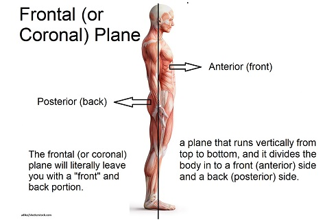 frontal plane, coronal plane, anatomy and physiology, nursing school