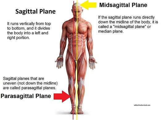 sagittal plane, midsagittal plane, parasagittal plane, median plane