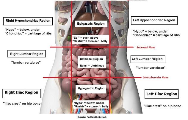 nine abdominal regions, epigastric, hypogastric,umbilical, hypochondriac, lumbar, iliac