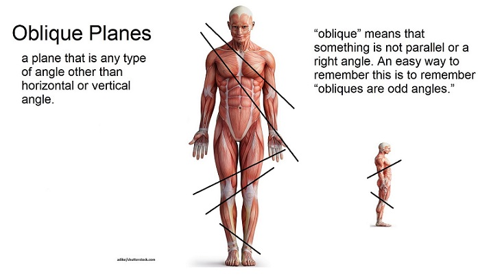 oblique plane, oblique section, anatomy and physiology