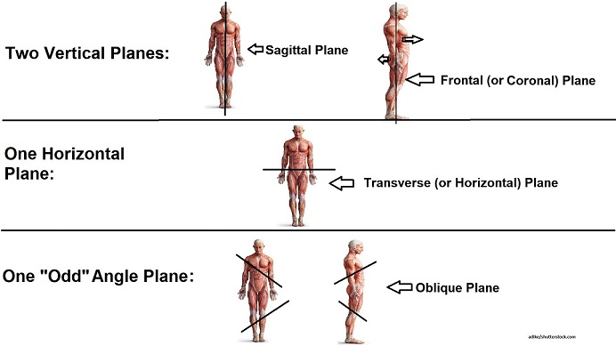 body planes, types of planes, anatomy physiology,nursing school