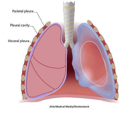 pleural cavity, pleura, visceral, parietal, membrane
