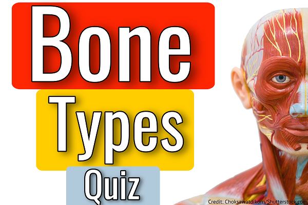 types of bones, bone types, quiz, questions, anatomy, physiology
