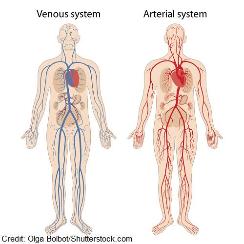 peripheral vascular disease nclex questions, quiz, pvd, pad, venous disease