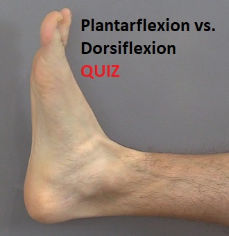 dorsiflexion, plantar flexion, quiz, anatomy, body movement terms