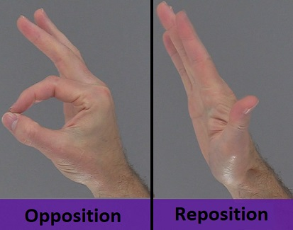opposition thumb, reposition thumb, anatomy body movements