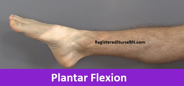 Plantar flexion, plantarflexion, anatomy, nursing, anatomy movement terms,body movements