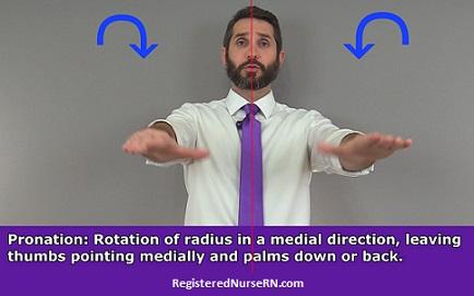 Pronation, pronate, anatomy, body movements
