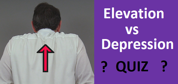 elevation depression quiz anatomy