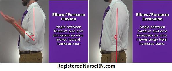 elbow flexion, elbow extension, forearm flexion, forearm extension