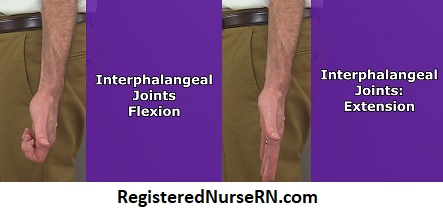 interphalangeal flexion, pip flexion,dip flexion, pip extension, dip extension, anatomy