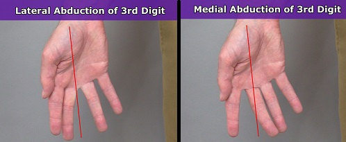lateral abduction, medial abduction, middle finger, 3rd digit
