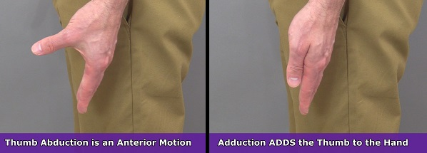 thumb abduction, thumb adduction, anatomy body movement terms