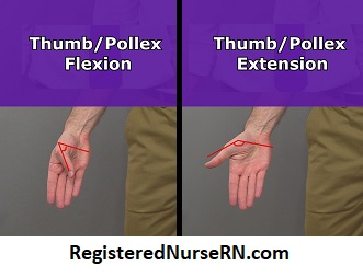 thumb flexion, thumb extension, anatomy, body movement terms, kinesiology