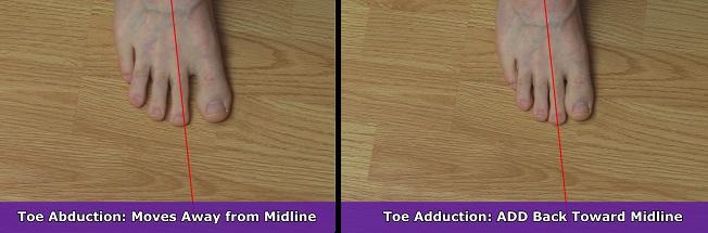 toe abduction, toe adduction, anatomy