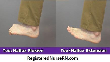 toeo flexion, toe extension, hallux flexion, hallux extension