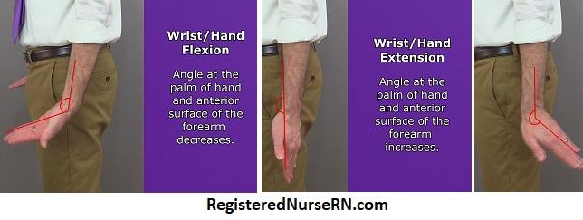 wrist flexion, wrist extension, hand flexion, hand extension