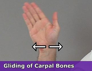 gliding, anatomy, carpals, gliding bones, plane joint