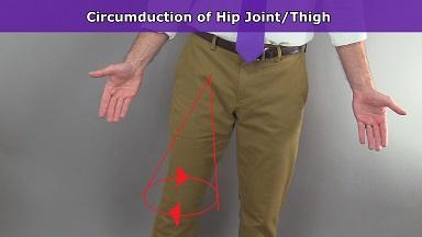 hip joint circumduction,thigh circumduction, anatomy