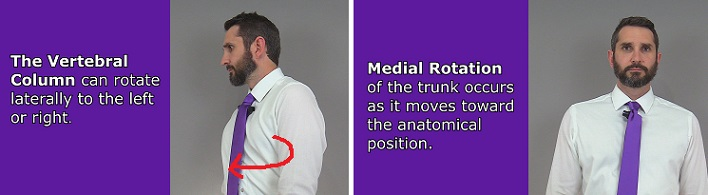 vertebral column rotation, spine rotation, trunk rotation, anatomy, lateral, medial