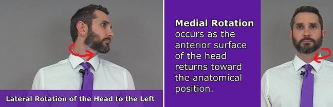 Head Rotation, rotation anatomy, neck rotation, body movement terms