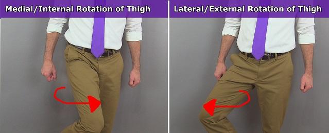 hip rotation, thigh rotation, femur rotation, lateral rotation, medial rotation, internal, external