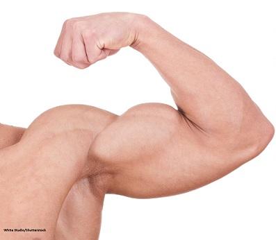 split biceps heads, flexing, bodybuilder, split biceps
