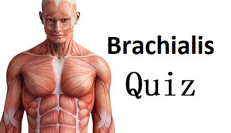 Brachialis quiz, brachialis anatomy, insertion, origin, action